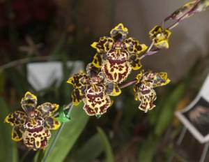 NHG_02orchids1