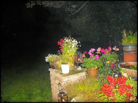 evening plants