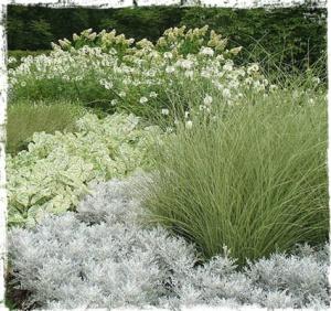 white plants