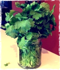 Cilantro use for Mexican recipes and salads