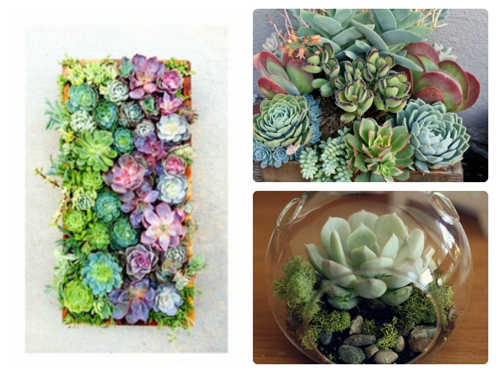 5 Beautiful Ways To Use Succulents Sam Loves Adventure