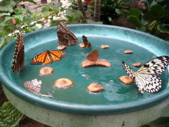 Butterfly2-@-BrightNest-Blog-570x427