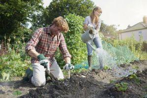 DIY Home Gardening