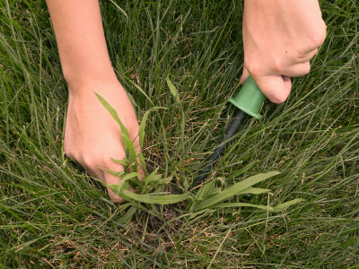 How To Get Rid Of Lawn Weeds 2