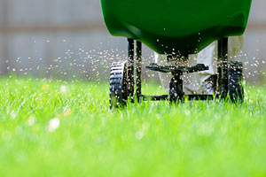 How To Get Rid Of Lawn Weeds 3