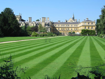 How To Get Rid Of Lawn Weeds 4