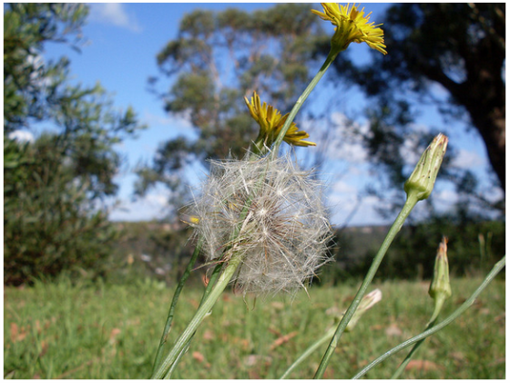 Lawn-Weeds